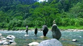 vários : Several pyramids made of rocks balancing on top of each other standing in shallow water of tropical river against vivid jungle on background. Video with sound of birds twitter. Camera stay still
