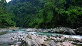 liána : Magical landscape of mountainous jungle with thick vivid vegetation. Mysterious rainforest with mountain river enclosed in rocky banks. Video with sound of water gurgling. North Sumatra, Indonesia.