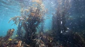 geléia : Underwater view of ocean thick with plankton at Goat Island marine reserve, New Zealand