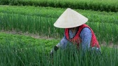 Asian woman working in the vegetable field in southern Vietnam