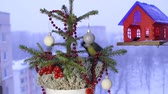 sobrevivência : Christmas video footage with the birds. Stock Footage