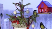 sikorka : Christmas video footage with the birds. Wideo