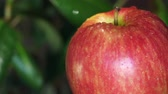 engomar : Red, Ripe Apple Watered
