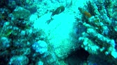 branqueamento : Following quick fish through a reef in the Seychelles