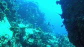 branqueamento : POV swim through of a reef to reveal divers in the Seychelles