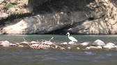 vários : white bird searches for food in river