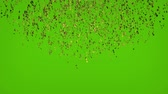 cicili bicili : Gold confetti explosion falling down. Green screen animation footage. Stok Video