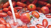 pia : Fresh red garden tomatoes soaking in water at kitchen sink - Organic cooking concept Stock Footage
