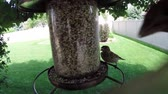 tohumlar : Birds eating seed from feeder