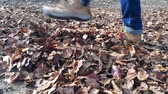caminhada : Legs of a man walking on fallen leaves, slow motion Vídeos