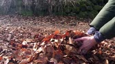 Young woman throws autumn leaves, slow motion
