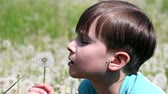 Little boy blowing on dandelion on sunny day
