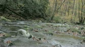 dumanlı : tracking along a downstream view of autumn mountain trout stream