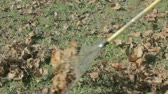 faaliyetler : view of autumn leaves being raked on green grass Stok Video