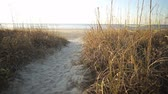 Следы : beach path over the sea oat covered dune with gentle waves on the horizon Стоковые видеозаписи