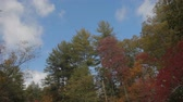 fall mountain autumn foliage on a windy day with clouds passing by Stock Footage