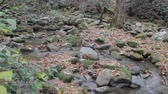 tracking along a small mountain stream with scattered rocks and autumn fallen leaves