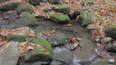 mountain stream with scattered rocks and autumn fallen leaves