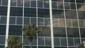 negócio : Two cabbage palms against a glass office with cloud reflections