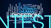 mide : Digestion animated word cloud, text design animation. Stok Video