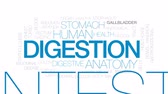 barriga : Digestion animated word cloud, text design animation.  Kinetic typography. Stock Footage