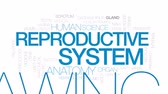 vagão : Reproductive system animated word cloud, text design animation. Kinetic typography.