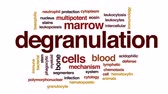 marrow : Degranulation animated word cloud, text design animation.