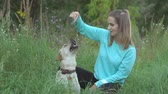 ретривер : Young woman is training her dog and encourages her with delicacy sitting in grass on nature on warm summer day Стоковые видеозаписи