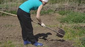 spades : woman works in the garden with a shovel. sowing season in rural areas.