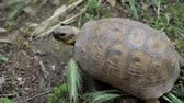 omnivore : Turtle moving on green grass, close-up. top view