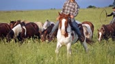domestic : Two cowboys drive herd of horses across the field