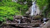тропический : Tranquil waterfall scenery in the middle of forest. Carpathian, Ukraine. HD video (High Definition) Стоковые видеозаписи