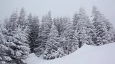 snowfall : Beautiful winter landscape with snow covered trees. Carpathian, Ukraine. HD video (High Definition)