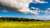 céu : Time lapse clip. HD video (High Definition). Sunny day in the field with blue sky. Overcast sky. Ukraine, Europe. Beauty world. Vídeos
