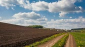 rostlina : Time lapse clip. HD video (High Definition). Sunny day in the field with blue sky. Overcast sky. Ukraine, Europe. Beauty world. Dostupné videozáznamy