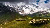 flora : Time lapse clip. Alpine meadows at the foot of  Mt. Shkhara. Upper Svaneti, Georgia, Europe. Caucasus mountains. Beauty world. HD video (High Definition)