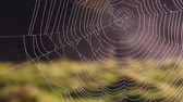 ukrajina : Empty web in the morning light. Picturesque day and gorgeous scene. Location place Carpathian, Ukraine, Europe. Explore the worlds beauty. Shooting in HD 1080 video.