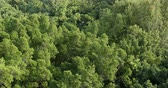 mangue : Top view of green forest