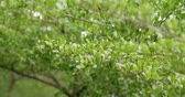 urlop : Green tree with breeze