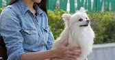 pomeranian spitz : Woman playing with her at outdoor park