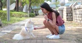 pomeranian spitz : Pomeranian dog playing with pet owner at outdoor