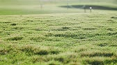 golfing : Variable focus on the lawn grass on the golf course Stock Footage