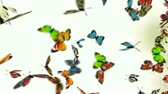 butterflies on white background, 3d animation