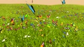 field : Spring Butterfly, 3D animation