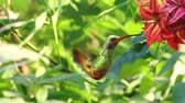 Humming bird, beautiful 3d animation Dostupné videozáznamy