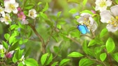 Butterflies in the bush, abstract nature background. beautiful 3d animation