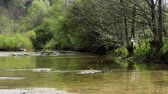 hydrology : Fresh river waters flowing. Stock Footage