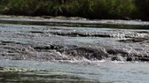 curso : Fresh river waters flowing. Vídeos