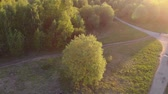 trees in the Park, the view from the top. rotation of camera around the tree Stockvideo