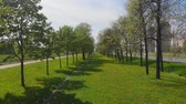 Top view of the alley of trees in the city Park, lawn and trees, the road ahead